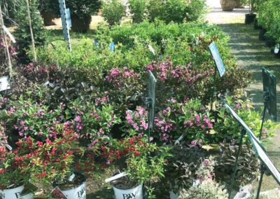 floweringshrubs