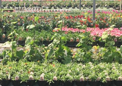 greenhousefull